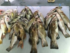 lautoka fish market lautoka wharf